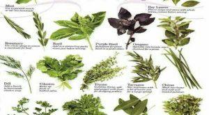 پودر گیاهی